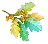 Oak tree branch with acorns and dry leaves Stock Illustration