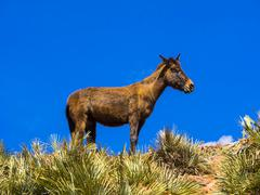 Stock Photo of Horse on a path in the Atlas Mountains Anammer Ourika Valley