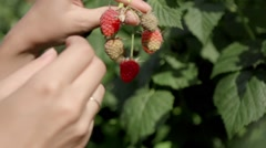 Hand and raspberries Stock Footage