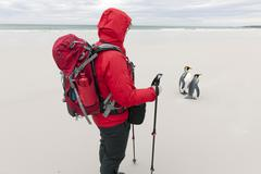 Female hiker and King Penguins Aptenodytes patagonicus Volunteer Point East Stock Photos