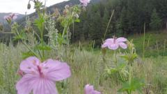 Wildflowers in Meadow up in the Mountains of Idaho Stock Footage