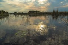 Stock Photo of Swamps of the Okavango Delta in the evening light Okavango Delta Botswana Africa