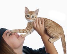 Tabby kitten paws - stock photo