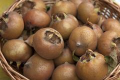 Hungarian Medlars Mespolus sp in a basket - stock photo