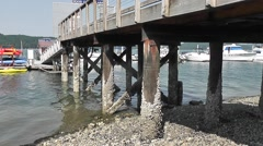 Crustacean Covered Pier Pilings Stock Footage
