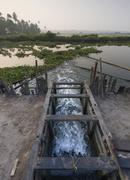 Opened wooden gate to regulate the water level of the Pokkali rice fields Stock Photos