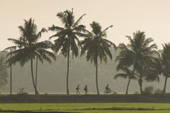 Stock Photo of School children on the way home palm tree avenue Kerala Malabar Coast South