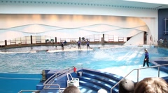 Dolphin Show - stock footage