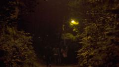Underlit pathway in forested area Stock Footage