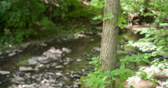 Nature scene with stream going through woods 4k Stock Footage