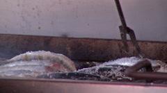 Sardines roasting on coal 3 Stock Footage