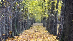 Gorgeous autumn alley, fallen leaf, sunny day, beautiful forest, great nature Stock Footage