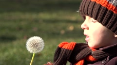 Stock Video Footage of Amusing child blowing an autumn dandelion, funny boy use the hand