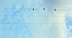 Low angle shot of birds on wire Stock Footage