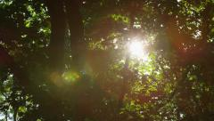 Sparkling Sun Trees Leaves Sparkle - 4k Stock Footage
