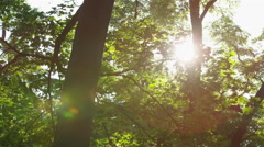 Sparkling Sun Leaves Large Tree Trunk - 4k Stock Footage