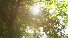 Sparkling Sun Trees Leaves Some Blurry - 4k Stock Footage