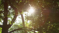 Sparkling Sun Leaves Large Trunk Bright Lens Flare - 4k Stock Footage