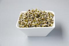 Green Gram Sprouts on White - stock photo
