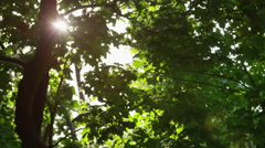 Sparkling Sun Trees Leaves Closer - 4k Stock Footage