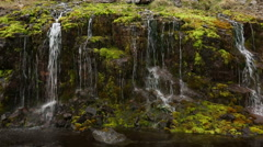 Moss and trickling water Stock Footage