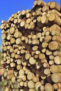 Stock Photo of Stacked lumber spruce logs Bavaria Germany Europe