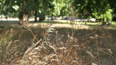 Hyde Park, London. Focus on foreground grass. Stock Footage
