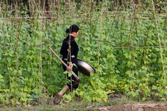 Farmer in bean culture Kuvituskuvat