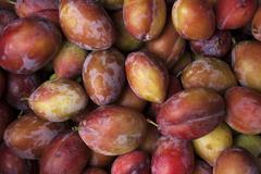 Plums Prunus sp La Palma Canary Islands Spain Europe - stock photo