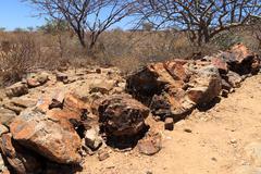 Petrified tree from Khorixas, Namibia Stock Photos