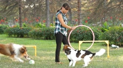 A Dog Jumps Through A Ring Stock Footage