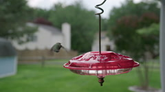 Slow Motion of Humming Bird feeding in a residential yard Stock Footage