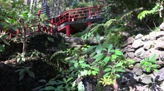 4k Chinese bridge and spring water in tropical garden Madeira Stock Footage