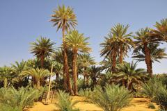 Simple drawing well with date palms Rachid oasis Tagant region Mauritania Africa Stock Photos