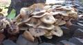 4k Strange mushrooms in tropical garden Madeira 4k or 4k+ Resolution