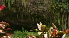 Wailua River State Park Fern Grotto, Kauai, HI Stock Footage