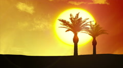 Tropical Sunrise, Palm Trees, Clouds - 4k sunset - stock footage