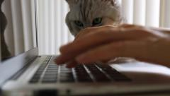 Typing on computer keybord, cat appears Stock Footage