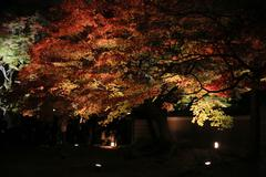 fall season of kodaiji night - stock photo