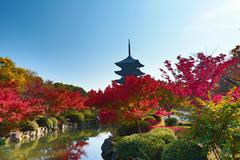 To-ji Pagoda in Kyoto, Japan during the fall season. - stock photo