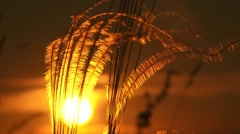 Evening Sun And Golden Feather Stock Footage
