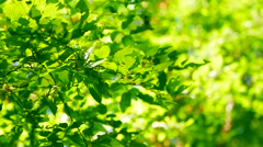Forest Trees Leaf. Nature Green Wood Sunlight Stock Footage