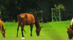 Slow zoom out of a grazing horse family. Stock Footage