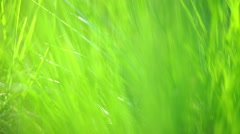Closeup of lush green grass in park Stock Footage