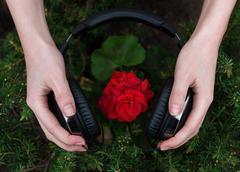 red geranium listening to music - stock photo