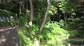 4k Tropical garden Madeira overview panning shot 4k or 4k+ Resolution