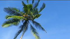 branches of coconut palm against blue sky - stock footage