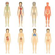 Set human organs and systems of the body vitality Stock Illustration