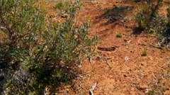 Native Australian Bush On Dry Ground Stock Footage