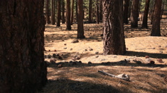 3 Axis Motion Control Time Lapse of Alpine Forest in California -Zoom Out- Stock Footage